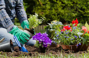 Gardening Services Ilford Essex