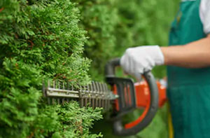 Hedge Cutting Ingatestone (CM4)