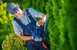 Hedge Cutting Edenbridge (TN8)