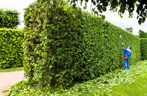 Hedge Cutting Stoke-on-Trent (ST1)