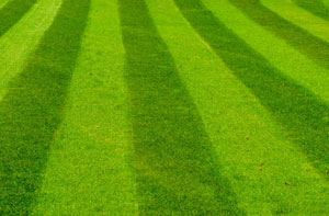 Lawn Care Rotherham (01709)