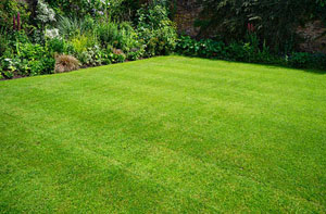 Lawn Care Sheerness (01795)