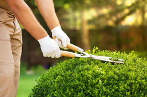 Gardeners in the Bognor Regis Area