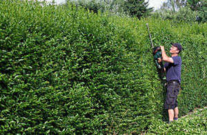 Gardening Services Polegate East Sussex