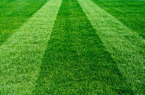 Lawn Care Epping (01992)